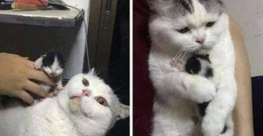 CAT MEET CAT